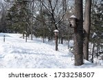 Birdhouses On The Trees In The...