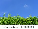 Walls  Trees And Blue Sky In...