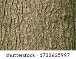 Texture Of Tree Bark Close Up