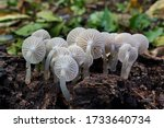 Close Up Picture Of Mushroom ...