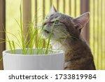Gray Tabby Cat Sniffing Fresh...