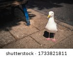 A Seagull Standing On A Street...