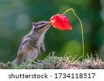 Cutest Squirrel Smelling A...