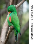 animal parrot bird | Shutterstock . vector #173415437