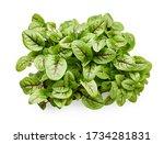 fresh micro green sorrel leaves.... | Shutterstock . vector #1734281831