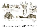 Rural Landskape  Forest And...