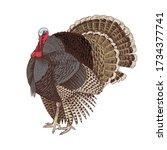 hand drawn turkey. poultry.... | Shutterstock .eps vector #1734377741
