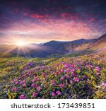 magic pink rhododendron flowers ... | Shutterstock . vector #173439851
