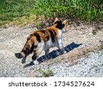 Young Bright Three Haired Cat...