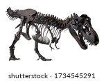 Wyrex  Tyrannosaurus Rex  ...