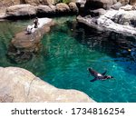 A Pond With A Penguin Swimming...