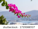 Traditional Greek Flowers On...