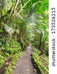 Narrow Path Though El Yunque...