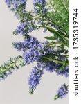 rustic blue bells flowers... | Shutterstock . vector #1735319744