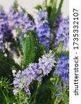 wild blue bells flowers macro... | Shutterstock . vector #1735332107