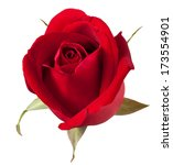 Stock photo red rose isolated on white background 173554901