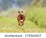 Stock photo running jackrabbit 173563427