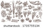 sketch spices and herbs.... | Shutterstock .eps vector #1735755134