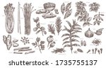 sketch spices and herbs.... | Shutterstock .eps vector #1735755137