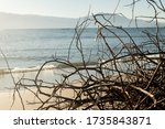 Dry Branches On The Beach At...