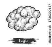 isolated truffle vector... | Shutterstock .eps vector #1736300657