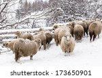 Many Sheeps