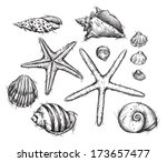 selection of sea shells drawings | Shutterstock . vector #173657477