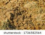 Manure Close Up. Fertilizer....