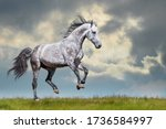 Grey Horse Running On The Grass ...