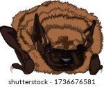 little brown bat realistic... | Shutterstock .eps vector #1736676581