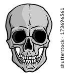 human skull isolated on white... | Shutterstock . vector #173696561