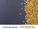 Texture With Of Barley Malt For ...