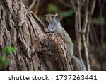 Photo Of A Grey Squirrel...