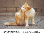 Small photo of Ginger white cat paw scratches behind the ear outdoors. Fleas and ticks in domestic animals