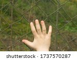 A Child\'s Hand On A Wire Fence...