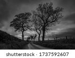 Black And White Image Of A...