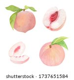 Watercolor Pink Peach Fresh...