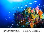 Underwater Coral Fishes View....