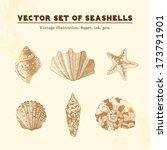 set of vector vintage seashells.... | Shutterstock .eps vector #173791901