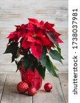 Red Christmas Poinsettia Plant...