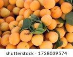 Fresh Apricots. Apricots...