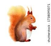 Red Fluffy Cute Squirrel....