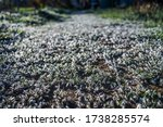 Closeup Of Icey Grass On The...
