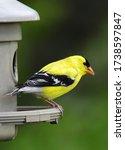 Closeup Of Pretty Yellow Male...