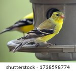 Closeup Of Pretty Yellow Femal...