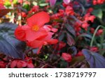 Pretty Coral Red Flower And...