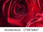 Stock photo fragment of red rose with water drops very shallow depth of field 173876867