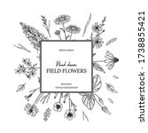 hand drawn summer wild flowers...   Shutterstock .eps vector #1738855421
