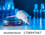 Animal Testing In Laboratory....