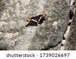 Monarch Butterfly On The Rock.